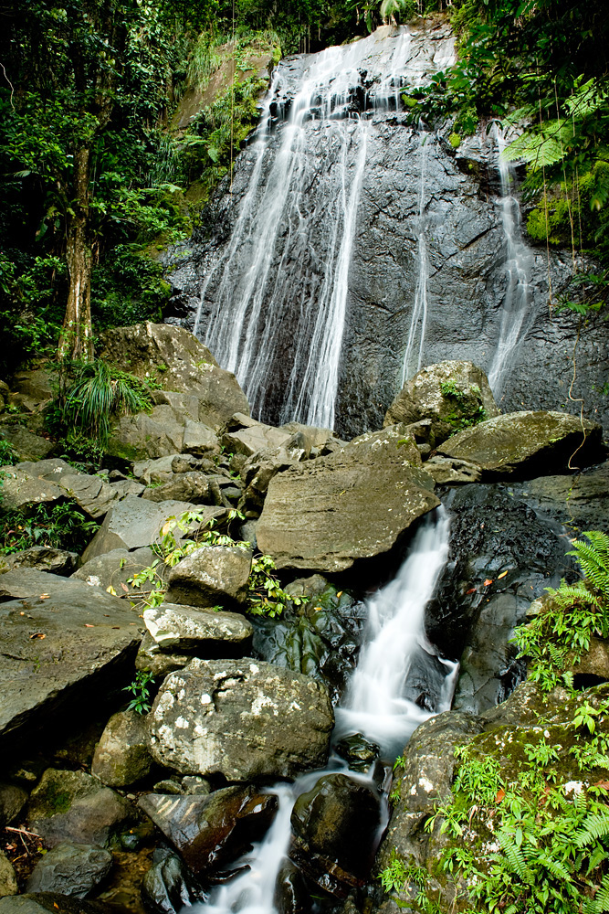 flora fauna puerto rico: