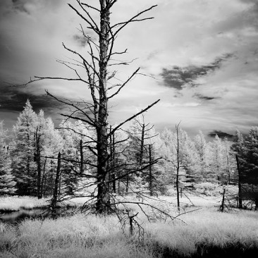 Near South Meadows Road (infrared)