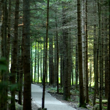 The fully-maintained trail around the Adirondack Loj