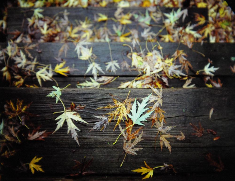 Leafmageddon