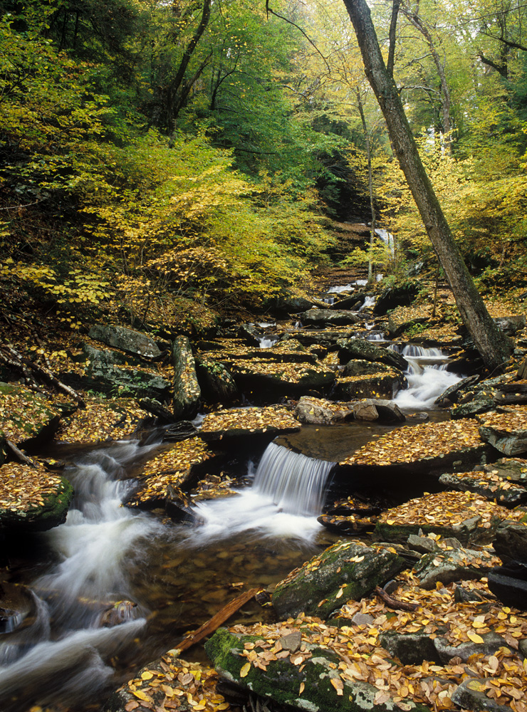 Ricketts Glen on Fuji Provia 400X