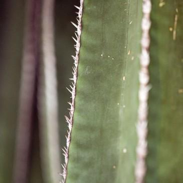 Cats & Cacti