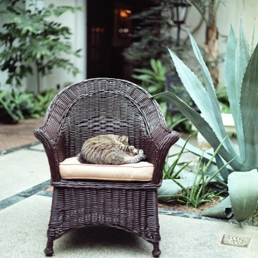 Longwood's cat