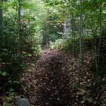 Blue Trail to Bradley Pond