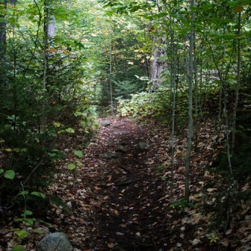 Blue Trail to Bradley Pond