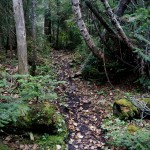 Part of the excellent Santanoni Express trail