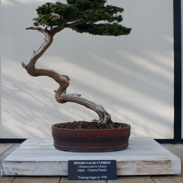 Bonsai with the 24/3.5 lens