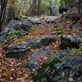 Shenandoah: Old Rag & Robertson Mountain Loop