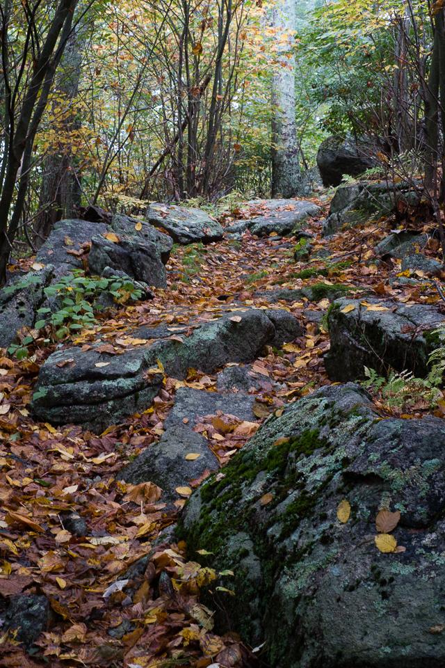 Shenandoah: Old Rag & Robertson Mountain Loop