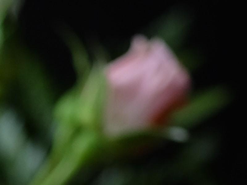 S-M-C Macro Takumar 1:4 50mm @f/4