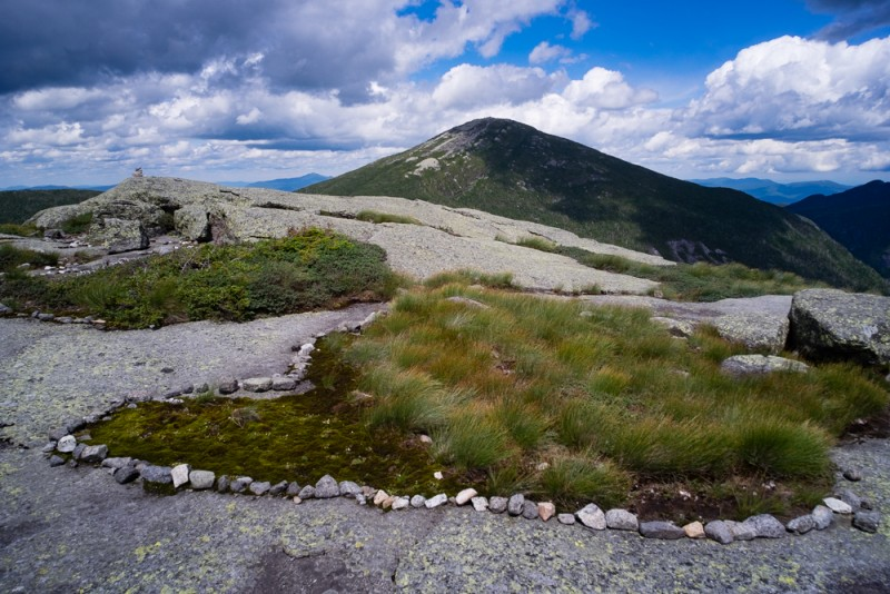 Restored alpine vegetation on Mount Skylight looking towards Mount Marcy, Adirondack Park New York USA.