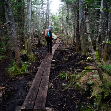 New bog bridges to Mt. Colden