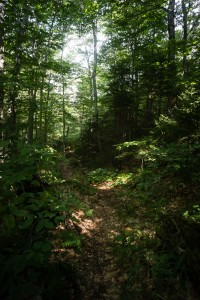 The lush Warden's Camp trail to Sawteeth, Adirondack Park, New York.