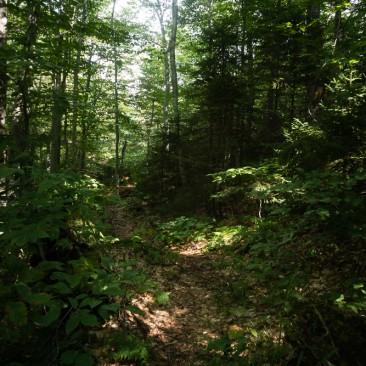 The lush Warden's Camp trail to Sawteeth, Adirondack Park, New York.