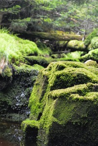 Mossy Stream on the way to Big Slide