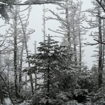 Winter wonderland ascending the Roaring Brook trail