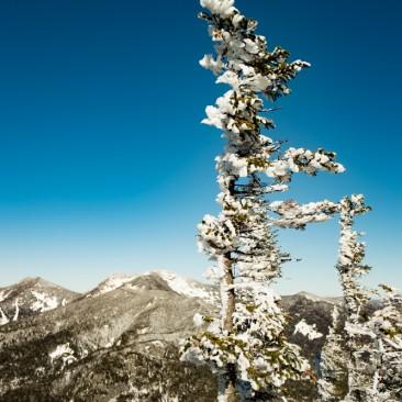 Wind-swept tree on Mt. Colvin (Saddleback & Gothics in background)