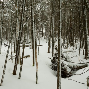 Fresh snow over the Calkins Brook trail