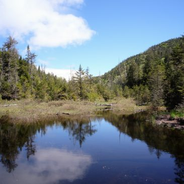 Beaver Dam near the trail to Duck Hole