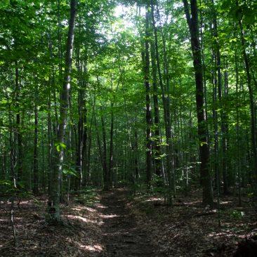 Trail to Peekamoose