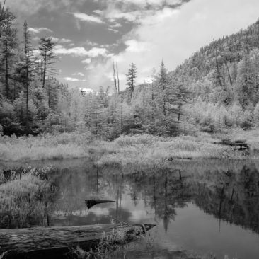 Beaver dam @ Bradley Pond