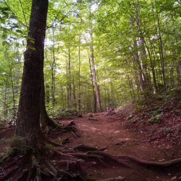 The Van Hoevenberg Trail