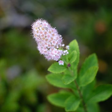 Flora on Cascade