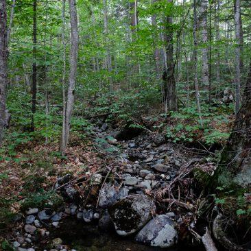 Ward Brook trail