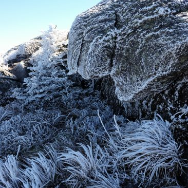 Frost on Wright Peak