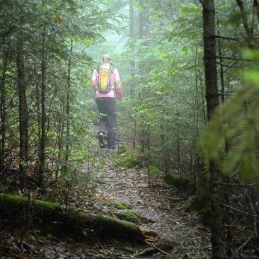 Misty Slide Brook trail