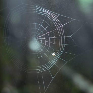 Fixing a web