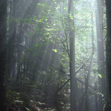 Sunburst along Slide Brook
