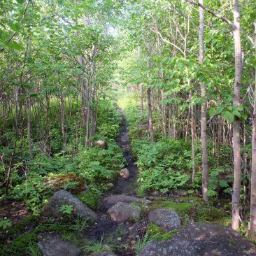 Leach Trail to Dial