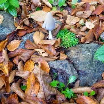 Mushroom on Bennies